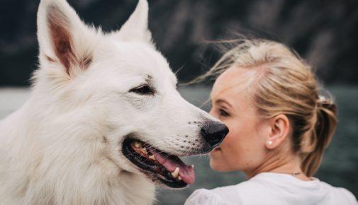 Hund-Mensch-Bindung