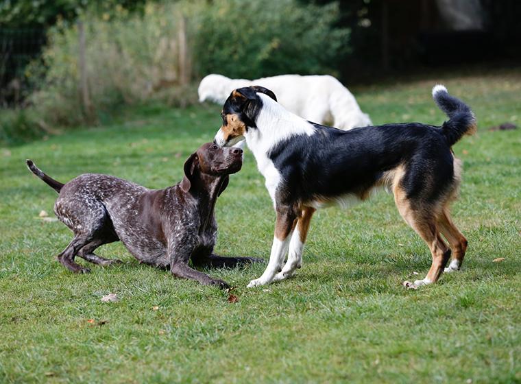 Rückruf Hundetraining