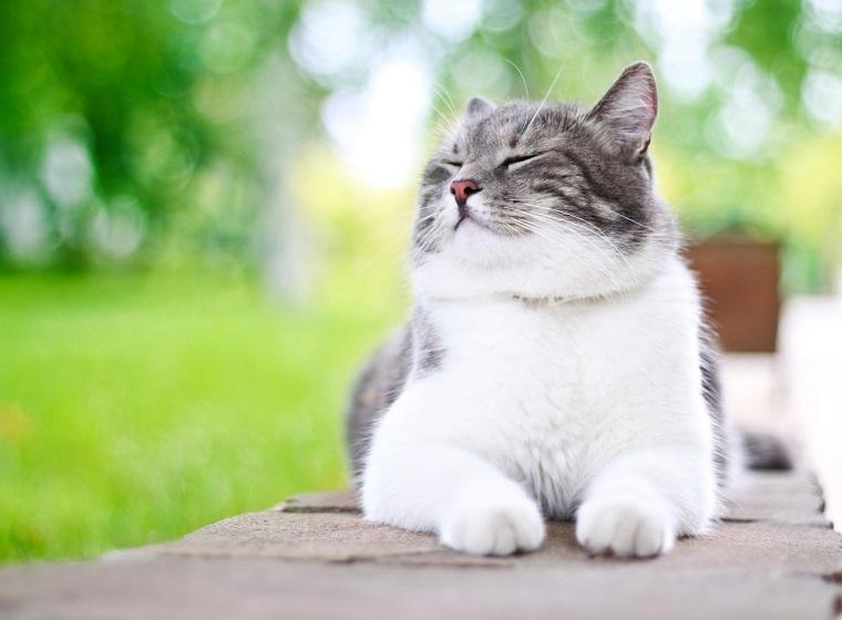 Katzen im Urlaub