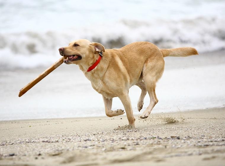 Hundestrände: Strandurlaub mit Hund