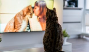 So schauen unsere Haustiere Fernsehen