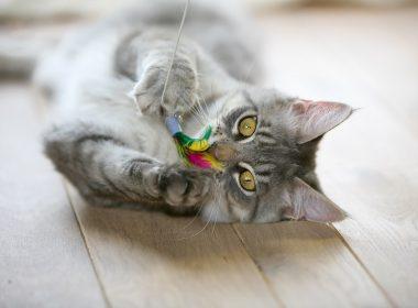 Neue Katzenspiele