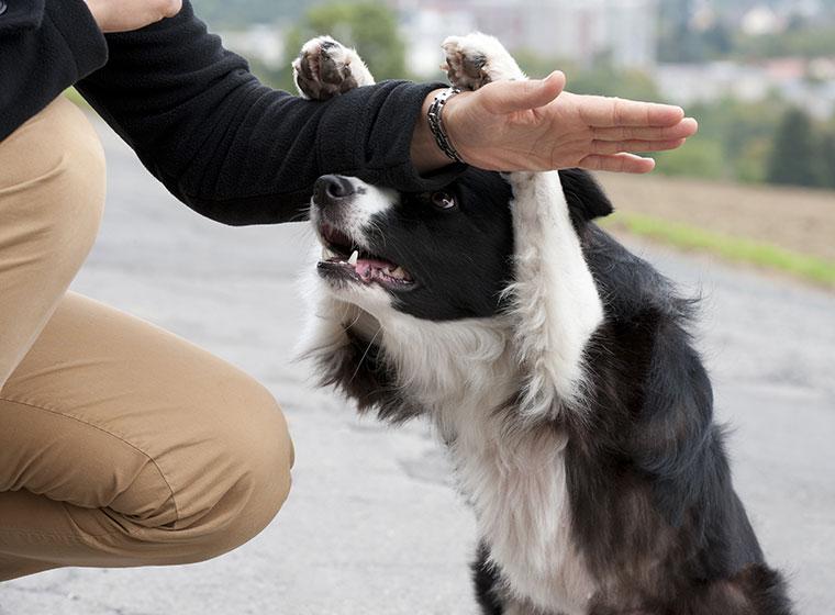 Hundehalter