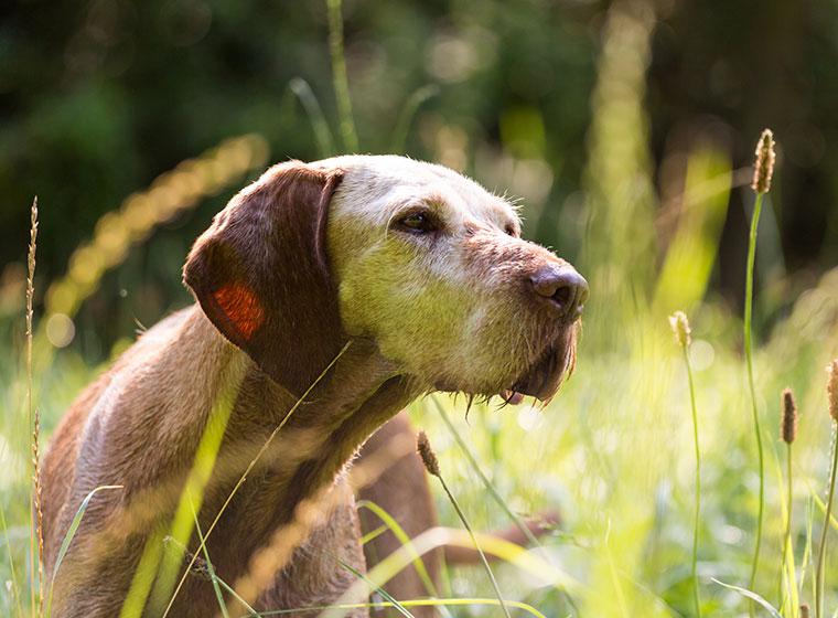 Hund im ALter: Hundesenioren