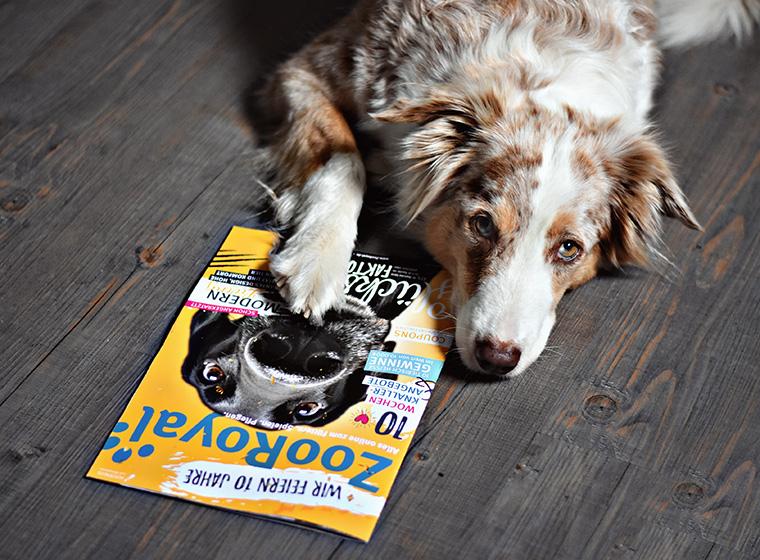 ZooRoyal Jubiläumsmagazin