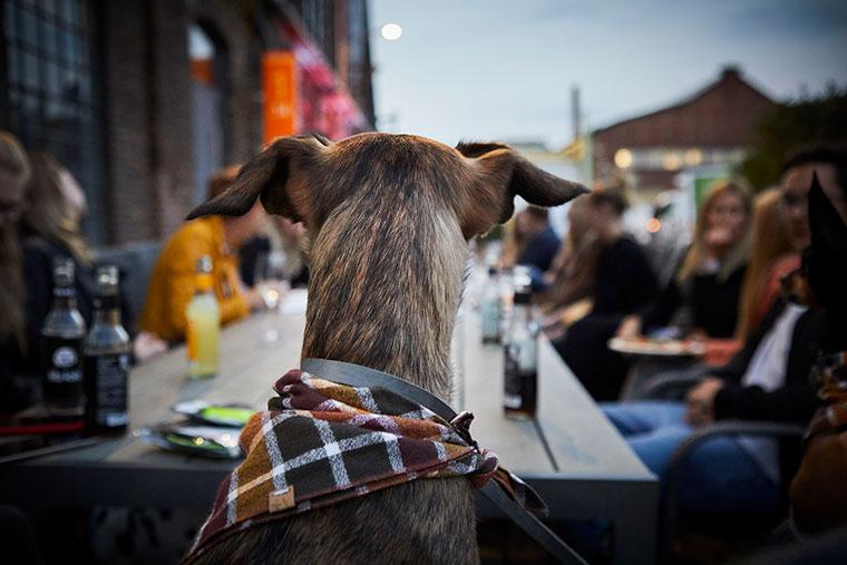 Tierisch vereint beim Bloggertreff