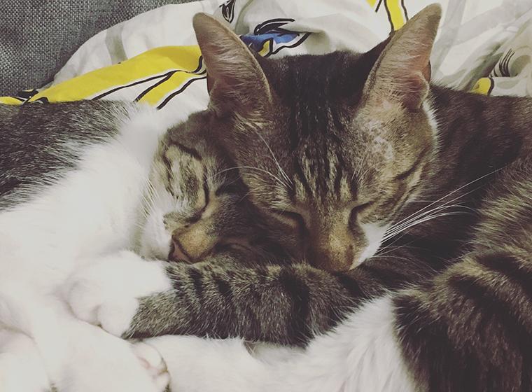 Katzen unters ich