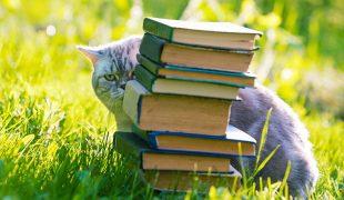 Katze mit Büchern