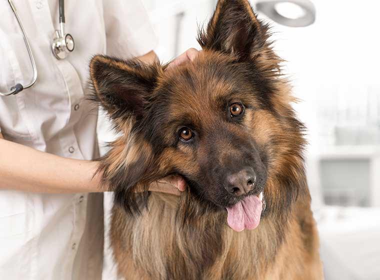Blutspende beim Hund