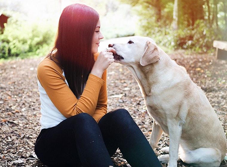Hundealltag