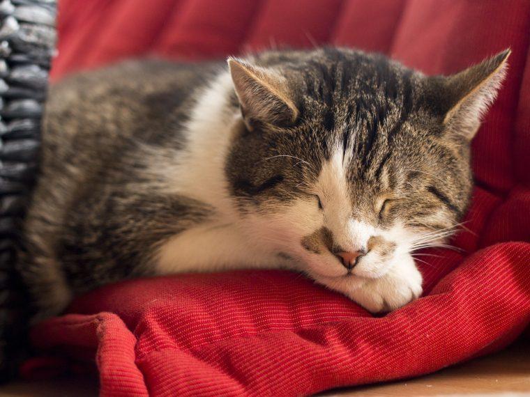 winterschlaf katze
