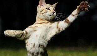 fehlende Krallen bei Katzen