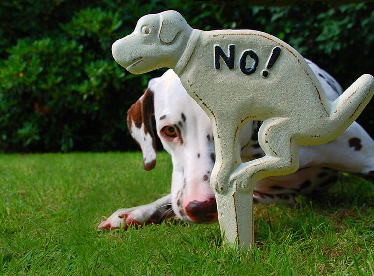 witzige Fakten über Hunde No!