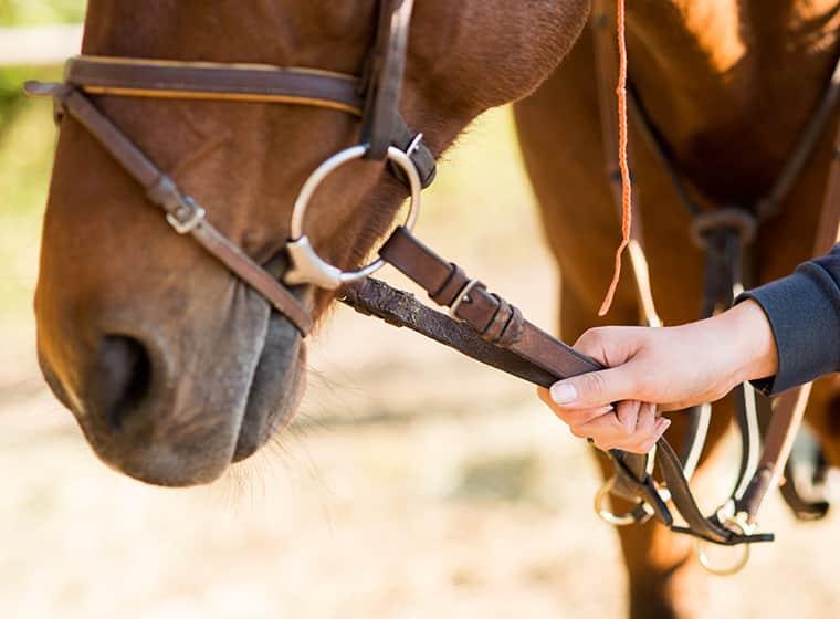Pferd sicher führen.