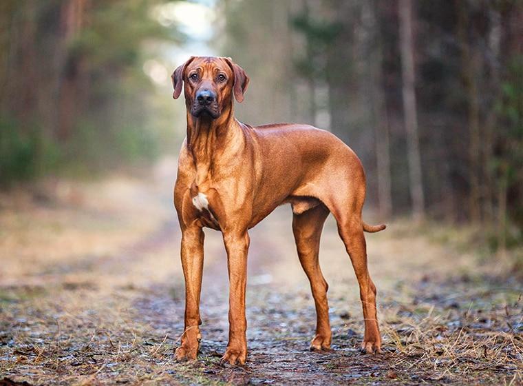 Futterauswahl für ausgewachsene Hunde