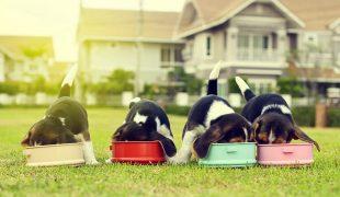 individuelle Ernährung beim Hund