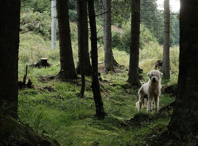 Straßenhund im Wald portraitiert von Robert Altmoser