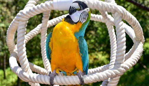 Papagei beschäftigen