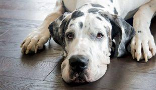 Bioresonanztherapie Hund