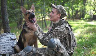 Militärhund