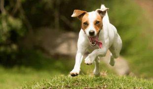 Gesundheitsprophylaxe beim Hund