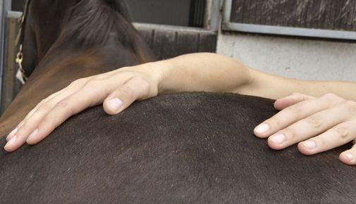 Physiotherapie beim Pferd