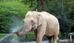 Abkühlung Elefant