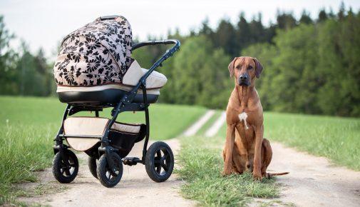 Gassigehen mit Hund und Kind