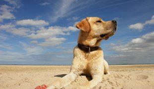 Reise mit Hund
