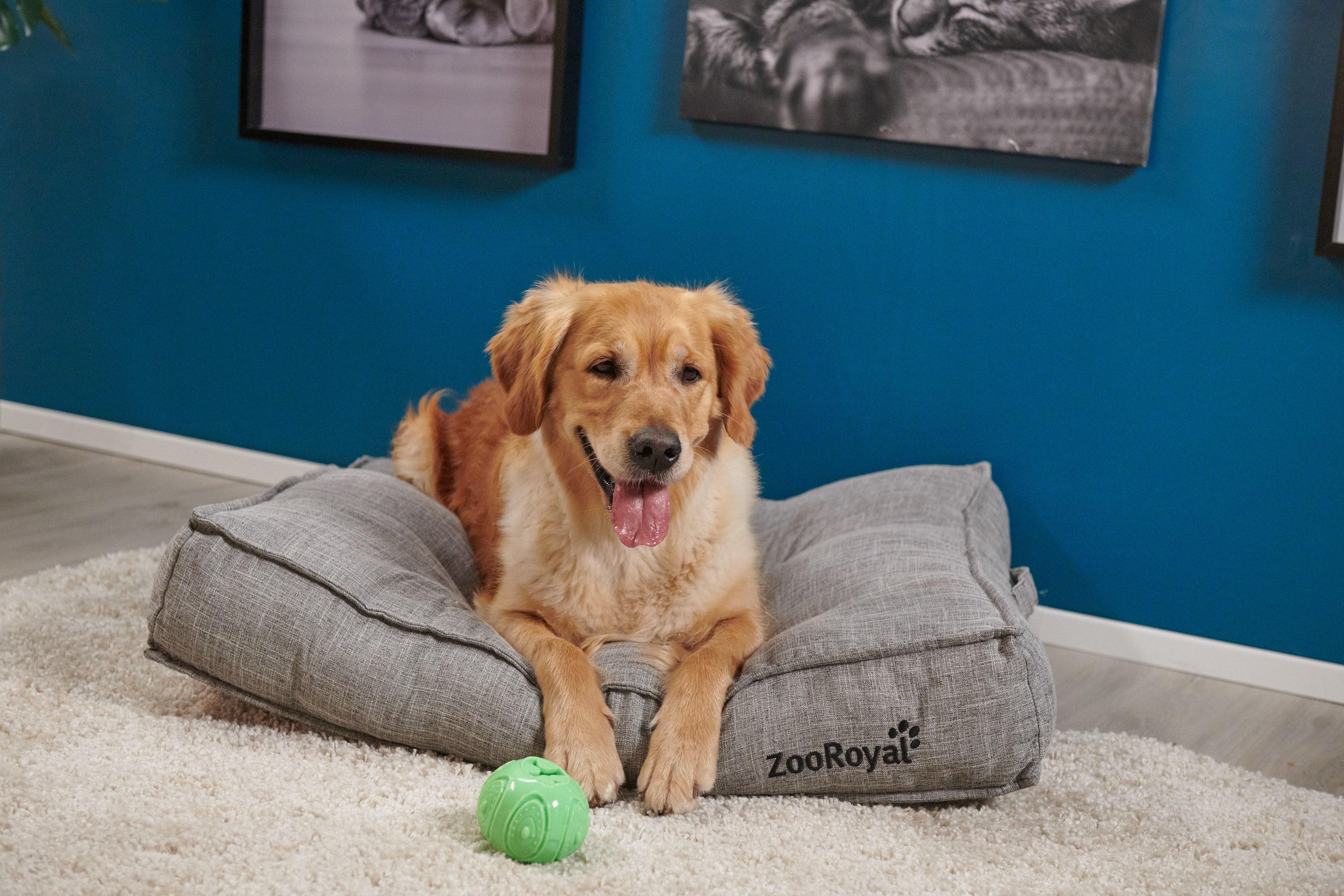 Hund auf Kissen