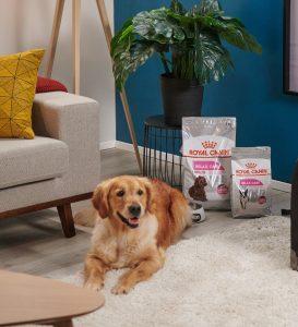 Produktempfehlung Royal Canin