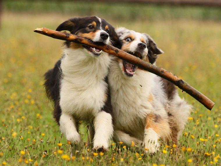 gruppenhaltung von hunden
