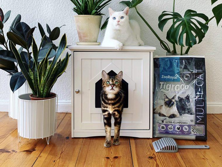 Katzen im Wohnzimmer