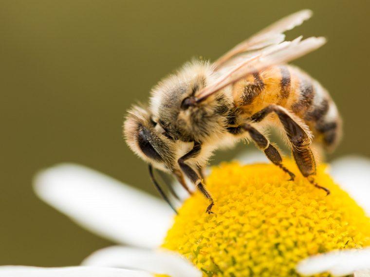 Bienenarten