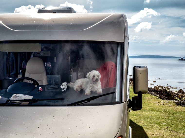 Roadtrip mit Hund
