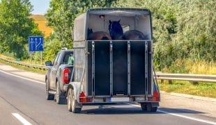 Anhängerfahrten mit Pferd