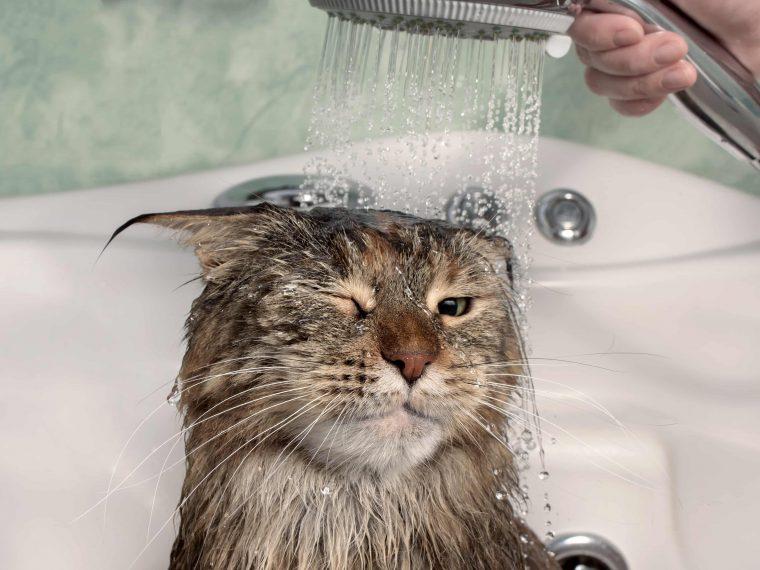 Katzen baden