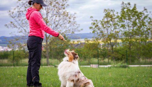 Corona: Existenzgefährdung für Hundetrainer