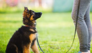 Wie viel Sozialkontakte braucht mein Hund