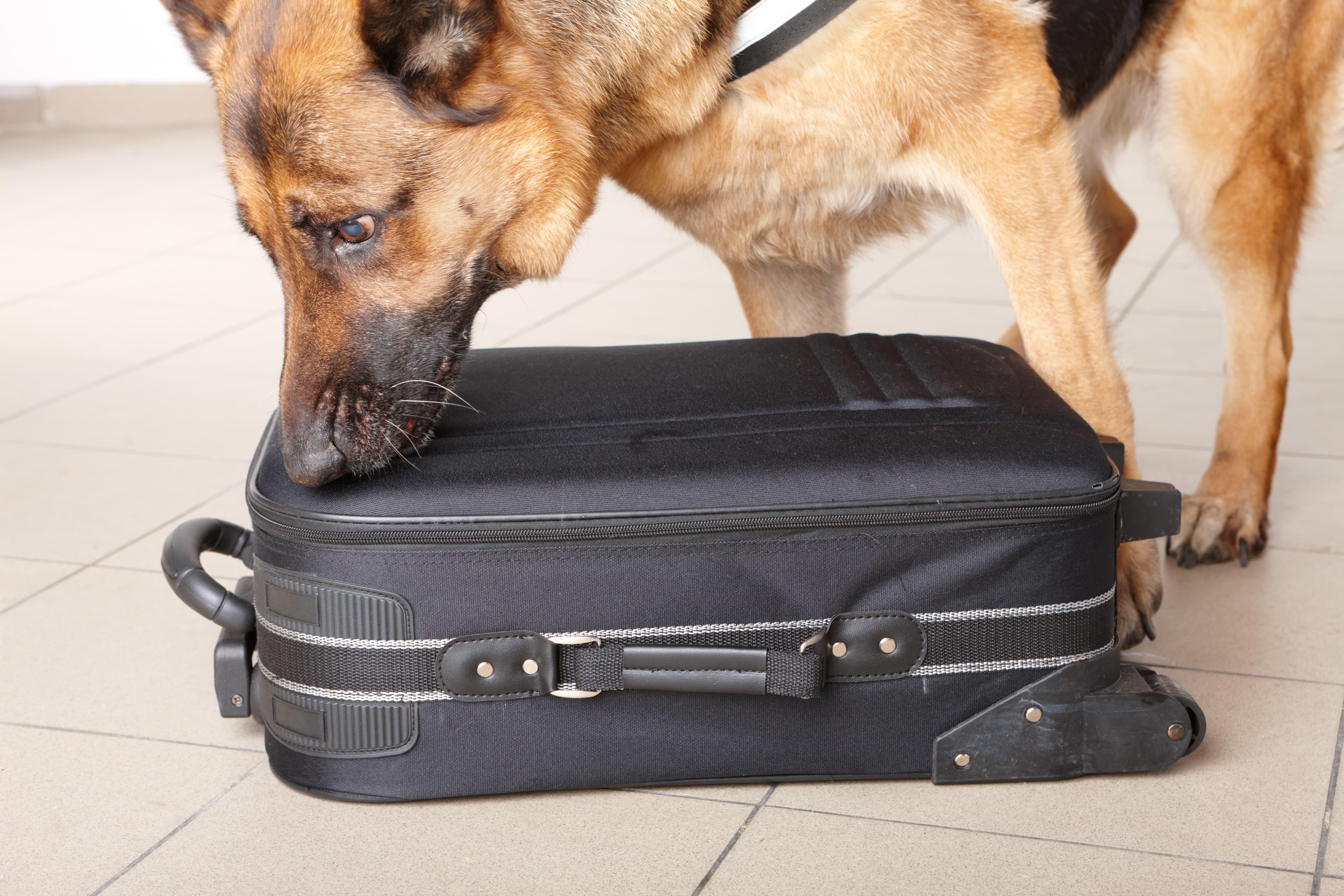 Datenspeicher-Spürhund