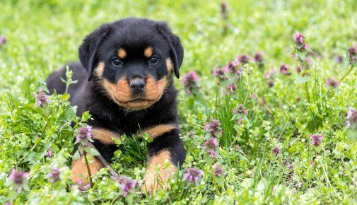 Wildblumen für Hunde