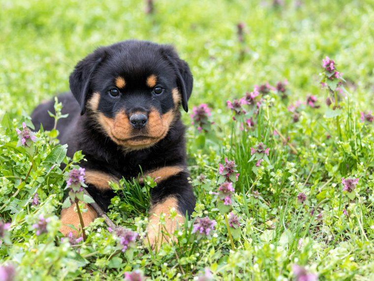 Wildblumen-Hunde