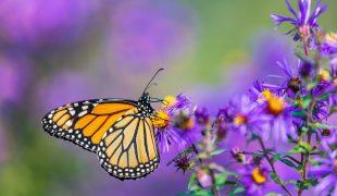 Schmetterlinge beobachten