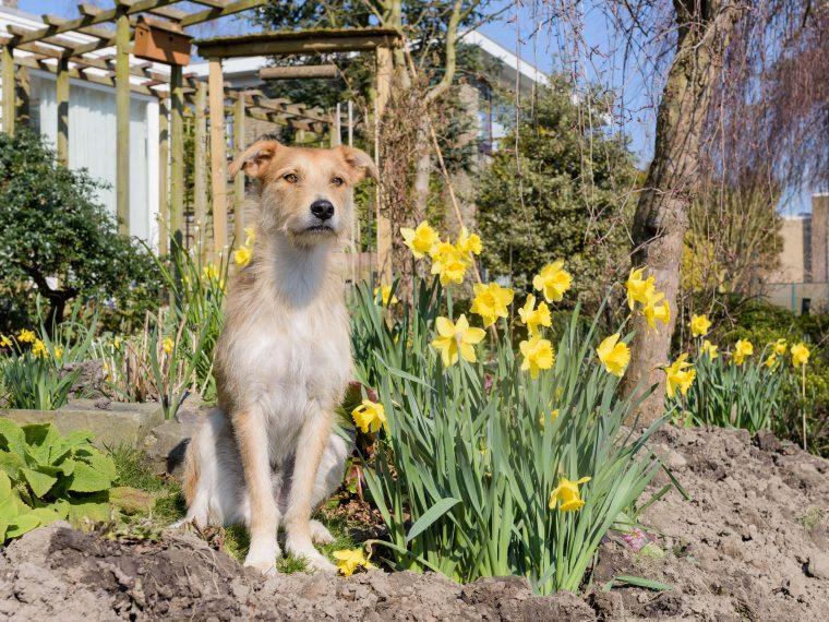 Giftige Gartenpflanzen für Hunde