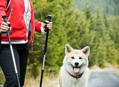 Nordic Walking mit Hund