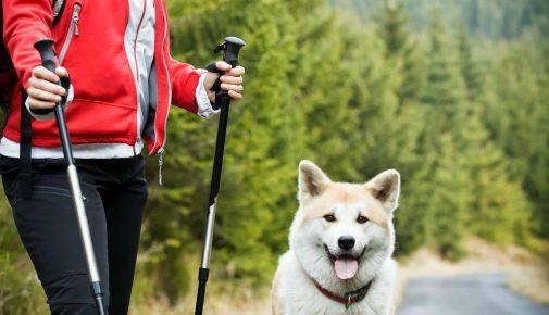 Nordic Walking mit Hund