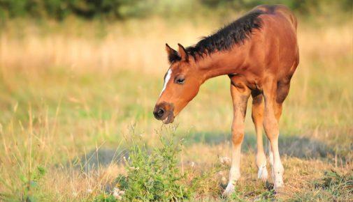 Pferd mit Pflanze