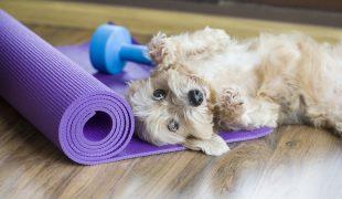 Doga -Yoga mit Hund