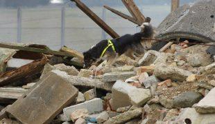 Trümmersuchhund