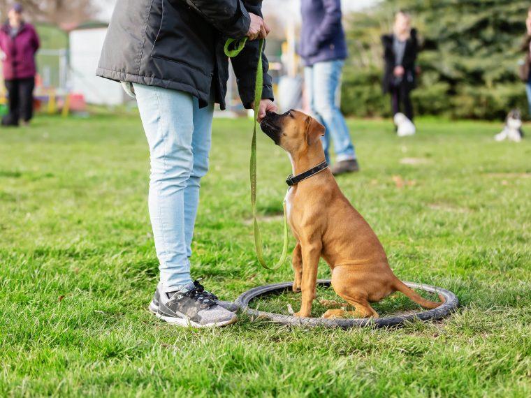 Wiedereröffnung der Hundeschulen